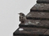 Bird-on-roof-