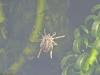 Pond-creature-1