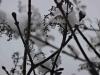 Snow-Sillouette-2
