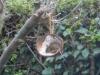 W-Mouse-2-crop-Pauline-M