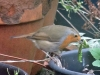 Robin-Feb-2014-P-Marples-